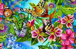 Image result for Colorful Butterflies